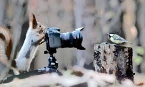 Photo of a squirrel taking a picture of a bird sitting on a piece of wood.